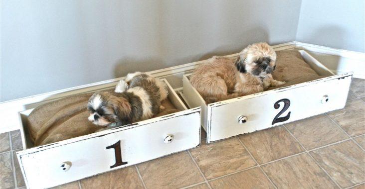 DIY Kedi Köpek Yatakları